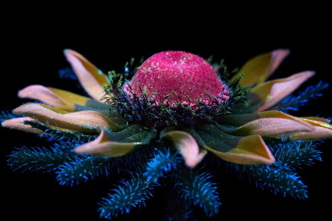 incredible photographs of flowers shot under ultraviolet and infrared lights creative boom. Black Bedroom Furniture Sets. Home Design Ideas