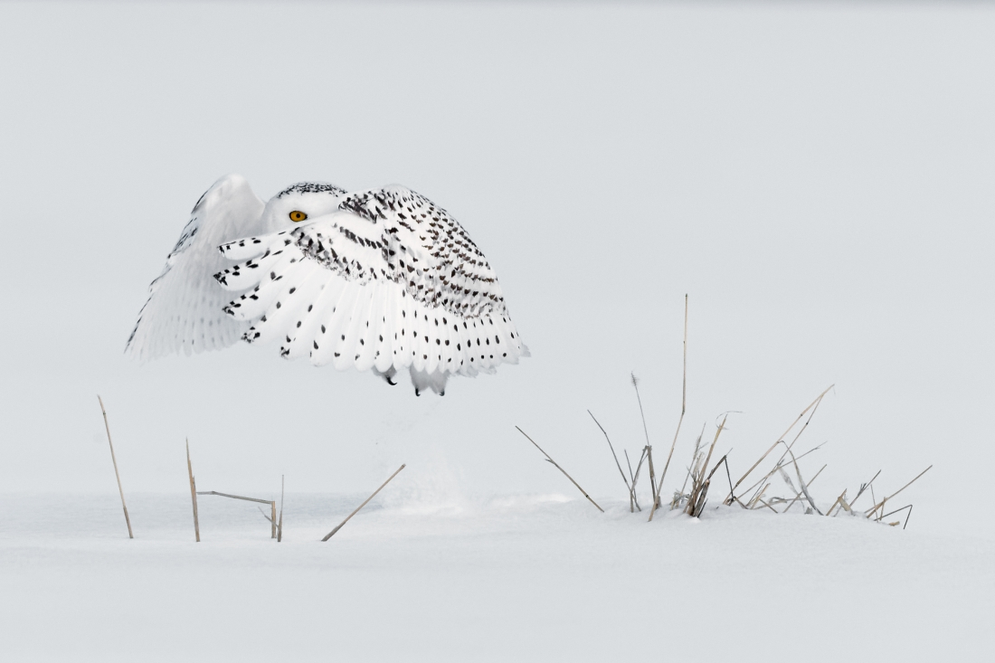 Copyright: © Milo Angelo Ramella, Italy, Entry, Open, Wildlife (Open competition), 2018 Sony World Photography Awards