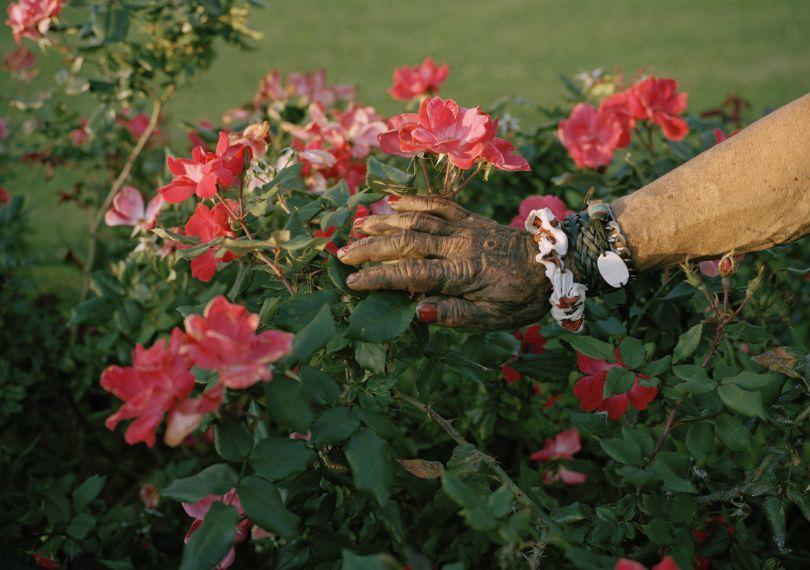 Mike's black hand in roses. New Orleans, Louisiana 2018 © Thilde Jensen
