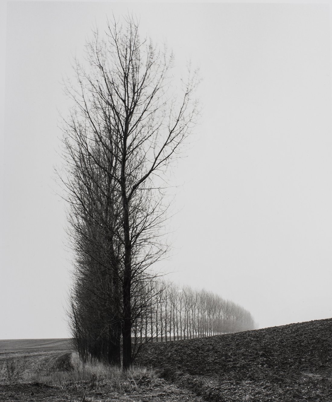 Line of Trees at Theipval. © Peter Cattrell