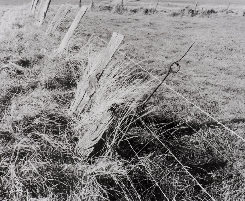 Wire Picket in Farm Fence, Frezenburg. © Peter Cattrell