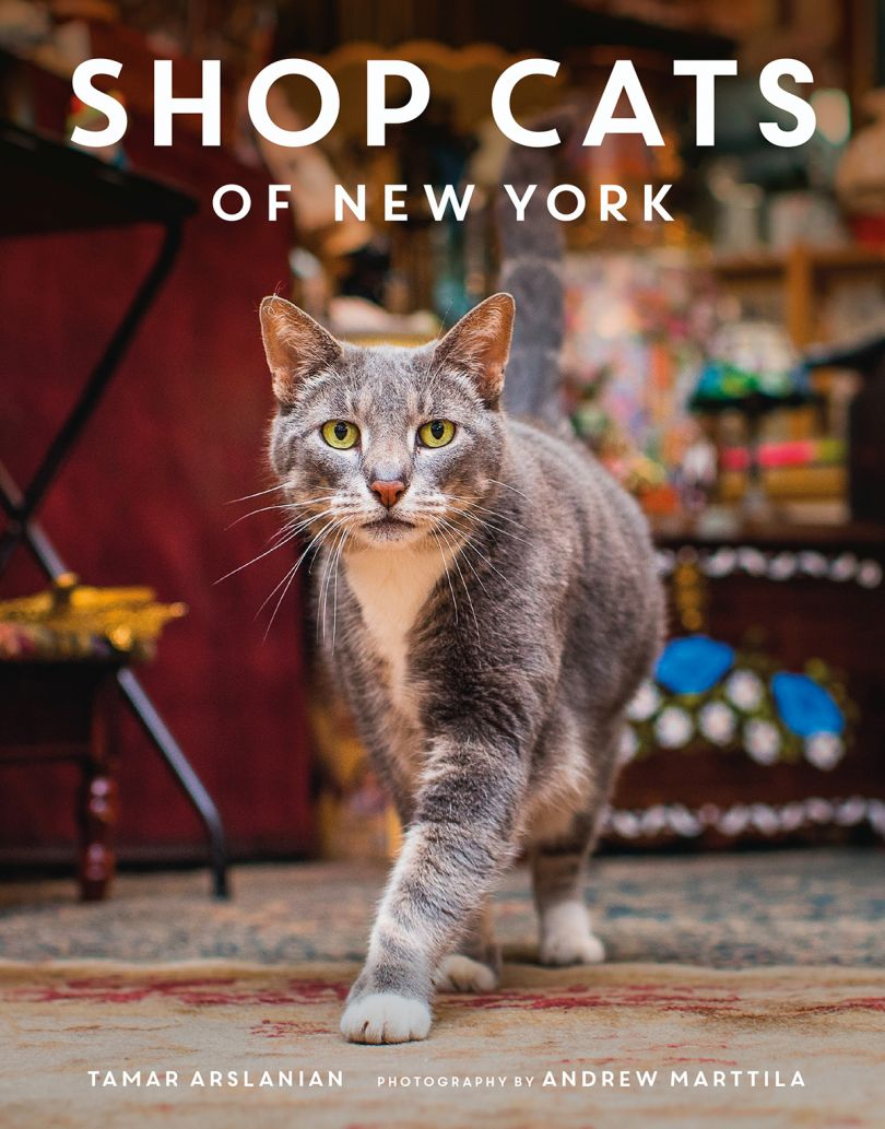 Book Cover for Cats of New York